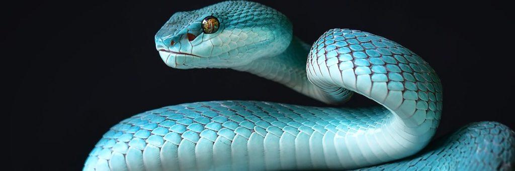 Snake-hero-AdobeStock_264973680.jpg
