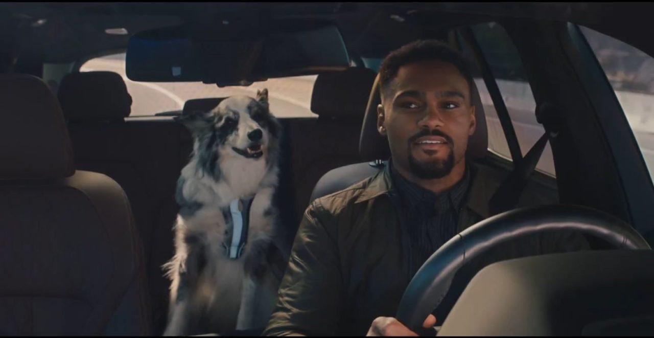 road-home-dog.jpg
