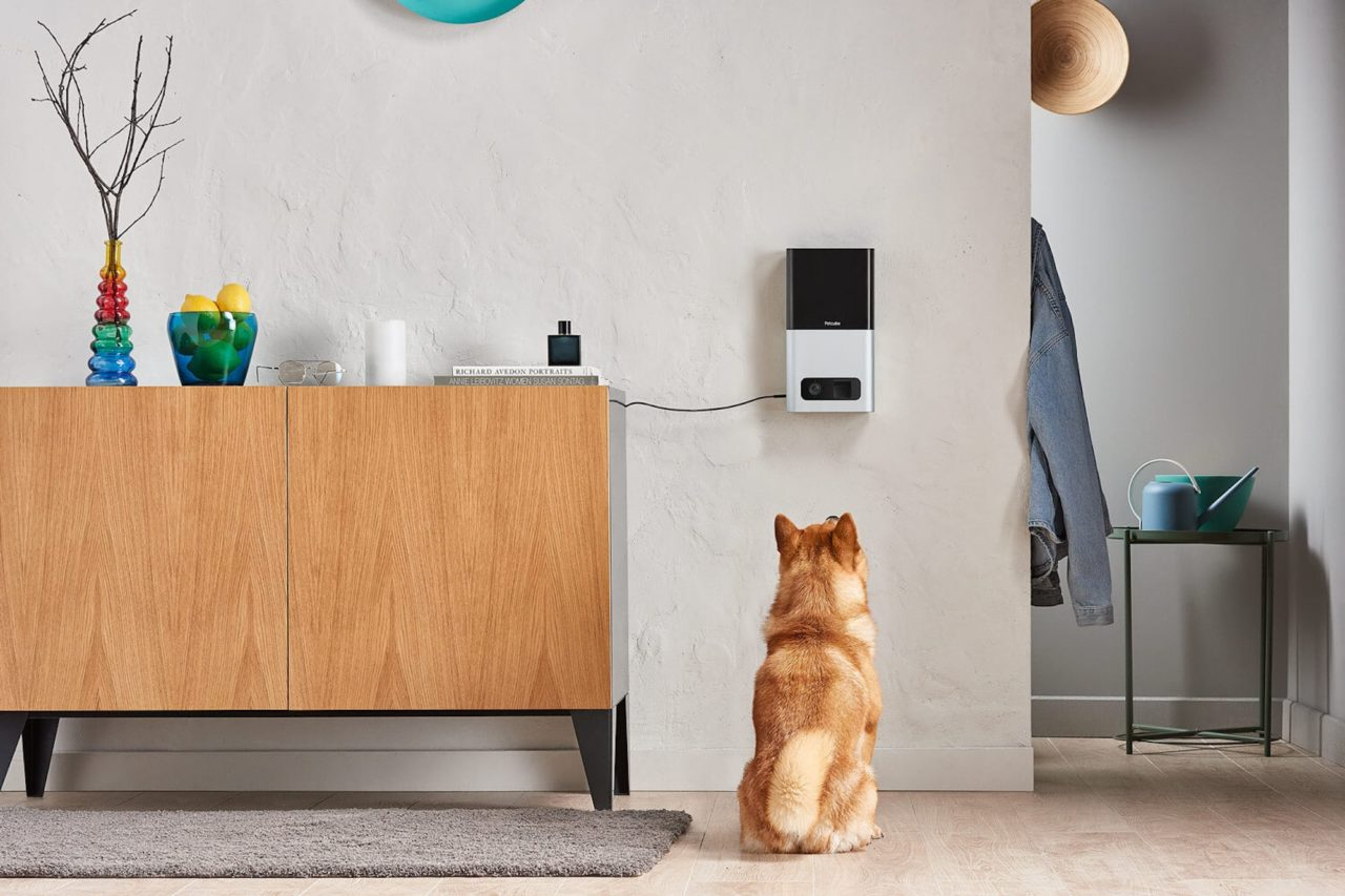 Best-pet-gadgets-and-accessories-of-2020.jpg