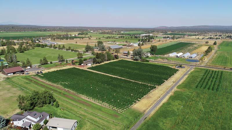 Turnbull-Hemp-Farm.jpg