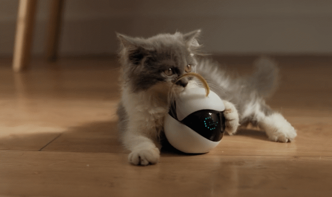 The little Ebo robot will brighten up your pet's life in your absence.