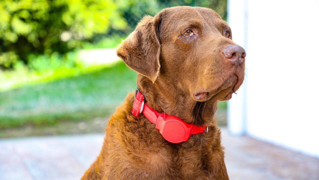 Doddle-built-in-dog-leash-01-1280x722.jpeg